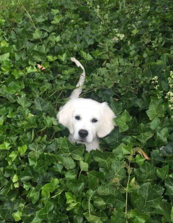 Lucka 20 – Låna en hund